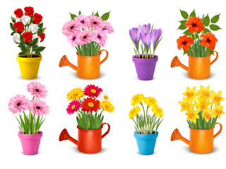 Mega collection of spring and summer colorful flowers in pots.  Vector