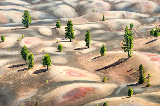 View of trees growing in Lassen Volcanic National Park