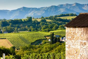 vineyard, Jurancon, France Wall mural