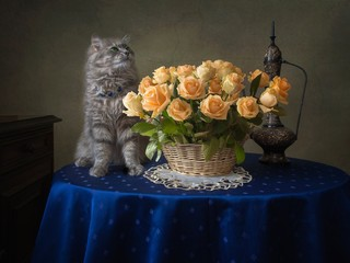 Still life with splendid bouquet of roses and funny kitty