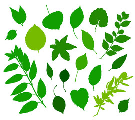 Green leaves silhouettes set isolated on white background. Vector illustration