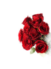 Red roses on the white background (isolated)