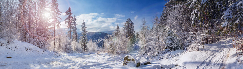 Winter landscape, panorama, banner - view of the snowy road in the winter mountain forest Fototapete