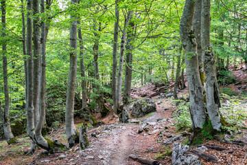Hiking Trail to Theth, Albania