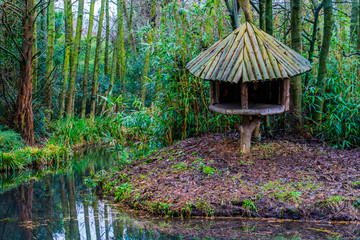 wooden tree hut on the river side in a tropical looking swamp landscape