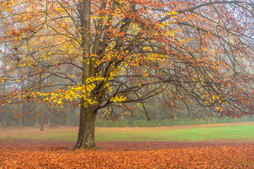 Golden autumn tones in the trees.