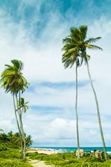 Itapua beach in Salvador, Brazil.