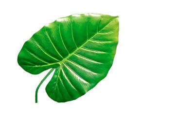 Feuille de plante d'intérieur en palme