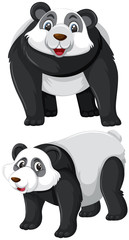 Set of panda character