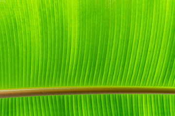 part of green leaf abstract macro texture background.