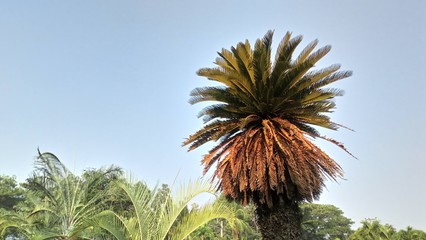 The palm trees have white skies and bright sunlight as the background.