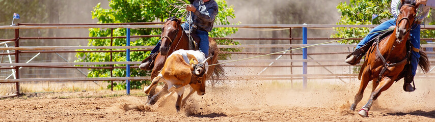 Calf Roping Rodeo Competition For Sport