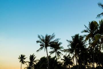 Beautiful silhouette sunset coconut palm tree blue sky