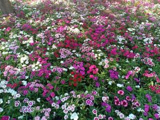 Flowers blooming volume 965868