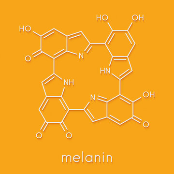 Melanin (eumelanin), proposed oligomeric structure model. Primary determinant of skin color. Skeletal formula.