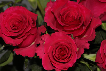 A bouquet of red roses on a white background. Photo suitable for postcard.