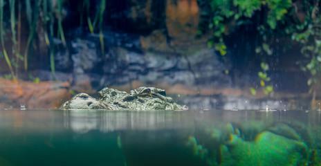 Poster Crocodile Krokodil im Wasser, Gefahr Australien Reise Backpacker Abenteuer Cairns