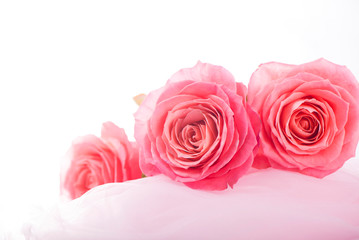 background pink roses on the soft silk