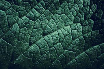 Leaf of a plant close up, dark green