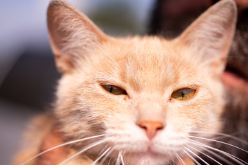 Happy cat. Beautiful red cat looks into the camera. Pats food for animal health. Portrait of a sad kitten.