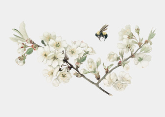Apple blossom illustrationon an X'mas card