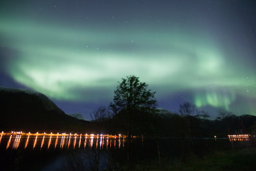 northern lights in Norway in green, blue and violet colours and a tree in front