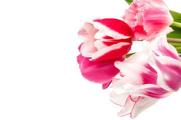 Tulips flowers bouquet isolated on white background
