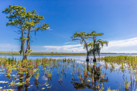 Beautiful Swamp in Florida