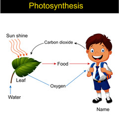 Photosynthesis modeling vector version, biology
