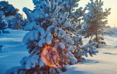 Beautiful Christmas landscape
