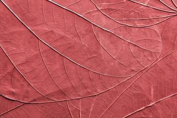 organic texture of leaves closeup