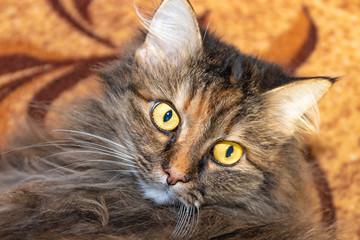 cat close up, surprise emotion