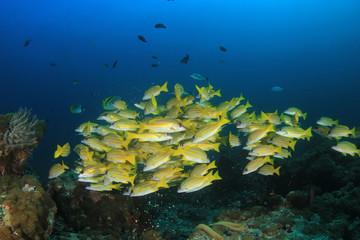 Underwater fish on coral reef