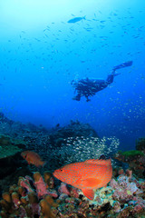Scuba diving, coral reef and fish
