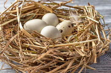 quail egg in a nest of hay on a wooden background