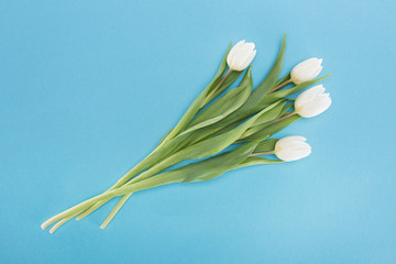 top view of white tulip flowers isolated on blue