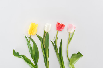 top view of yellow, white, red, and pink tulips isolated on grey