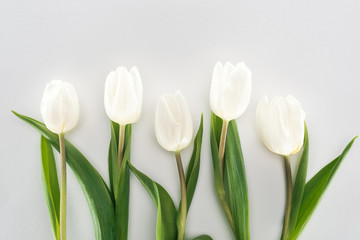 top view of white tulip flowers isolated on grey