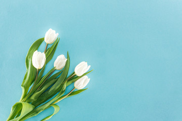 top view of white tulips isolated on blue background