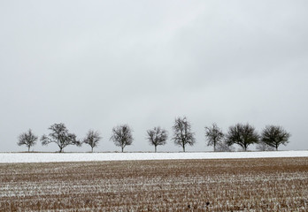 row of trees in winter with grey sky, partly snow  and field in foreground gives a sad feeling