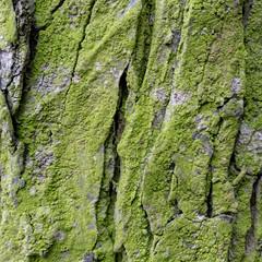 wet bark in harmonic structure