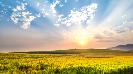 Beautiful sunset in the mountain with blue sky and barley field. The evening nature background with sunlight on summer season.