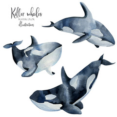 Watercolor killer whales illustration, hand painted collection, isolated on a white background