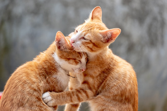 two cat playing