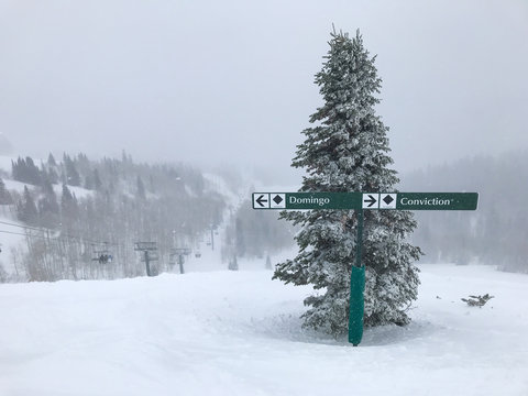 Heavy snowfall at Deer Valley; two black diamond ski run signs by a tree.