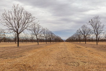 A Nut Farm in New Mexico During Winter