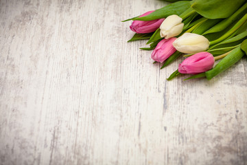 Pink and white tulips on light background