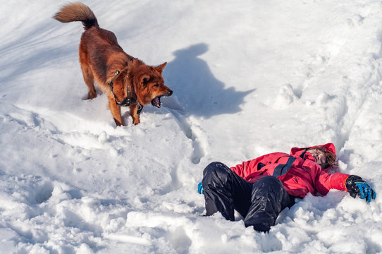 A lifeguard dog found the boy unconscious in the snowy mountains. Rescue dog. Helping those lost in the mountains