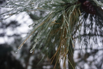 Freezing rain in Bucharest, ice rain