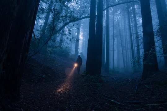 Person in the forest